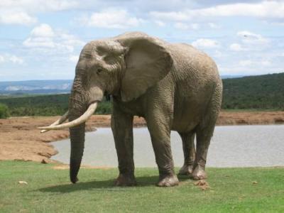 1372579elephant_addo_elephant_natio.jpg