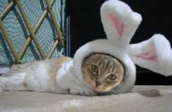 cat-rabbit-1.jpg