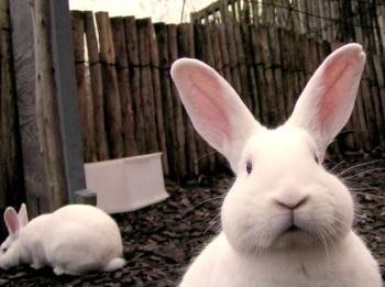 cute-bunny.jpg