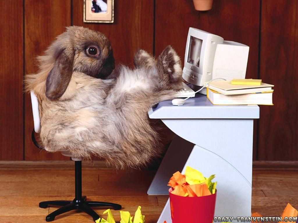 http://bradleysanimalplace.files.wordpress.com/2008/03/funny-wallpapers-rabbit-at-work.jpg