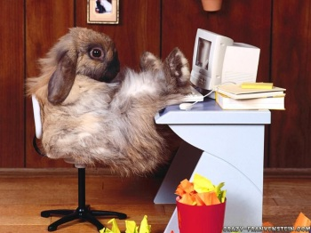 funny-wallpapers-rabbit-at-work.jpg