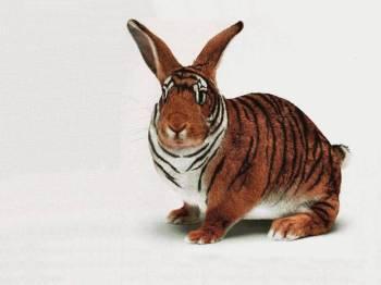 rabbit-funny-pets-wallpapers.jpg